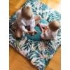 Kép 1/6 - Kinder Hop játszószőnyeg - dzsungel